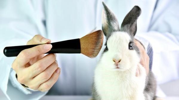 La importancia de la certificación de no testeo en animales en la industria cosmética